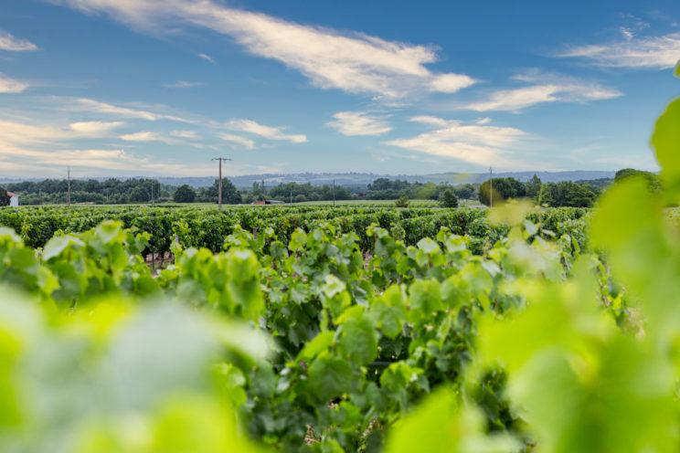 paysage vignoble fronton reportage entreprise photo